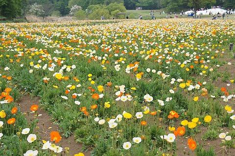 ザ・お花畑