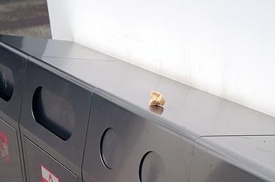 ゴミ箱が似合う