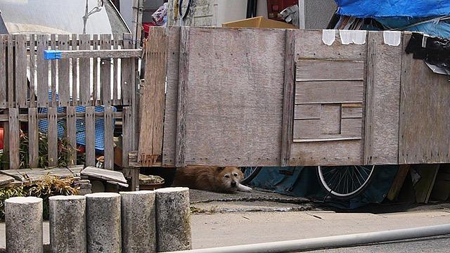 望遠で撮った猫又にいた犬
