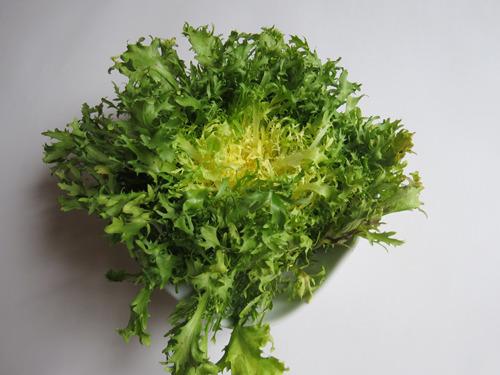 チコリフリーゼ、という野菜をくれた