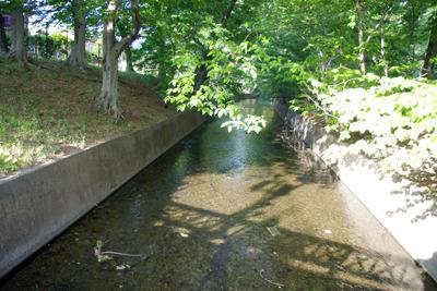 急に護岸整備される。まじめな面持ちの川。