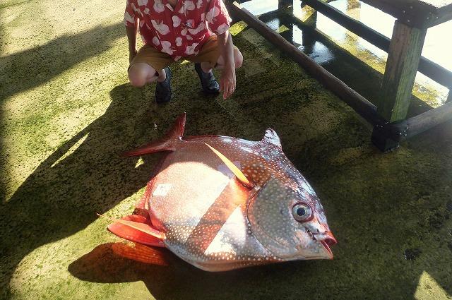 石垣島の漁港にて撮影。水揚げされたばかりの個体。