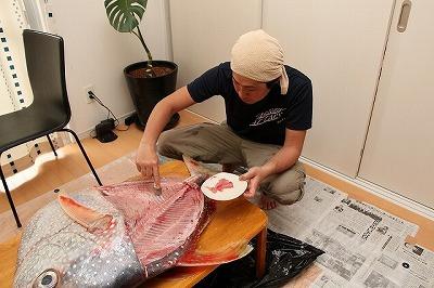 スプーンで中落ちを削ぎ取る。大きな魚を捌くときにしか楽しめない作業。