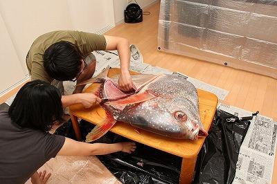 この夫妻は揃って魚の扱いに長けている。包丁さばきがスムーズ。