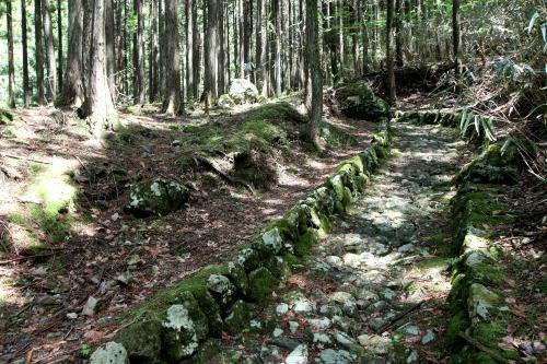 なかなかしっかり整備されている登山道である