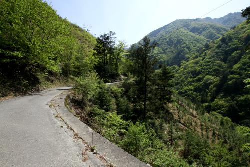 木々がないと、素晴らしく眺めが良い道ではある