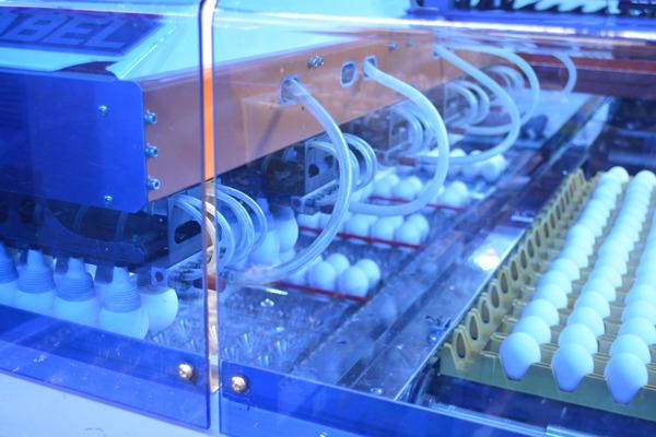 これ、左側に見えるグレーの装置が、空気で卵を吸い寄せているんだそう。