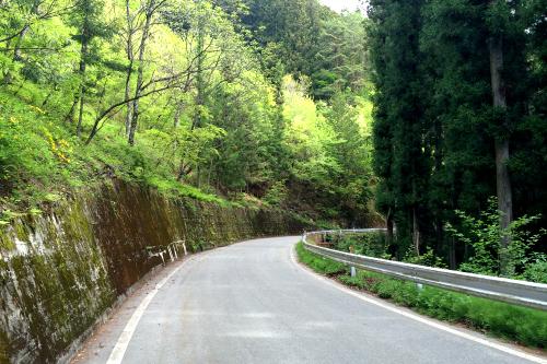 ある程度まで登ると、割と平坦な道路となった