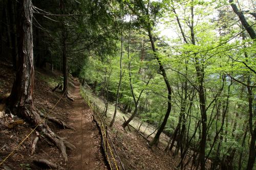 上り下りこそ少ないが、山道なので足元注意