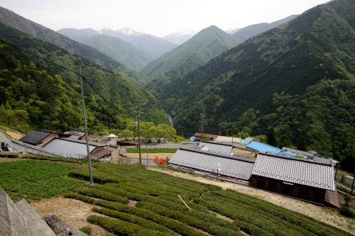 水はけが良く、昔はムギ、アワ、ヒエ、現在はイモや茶を栽培しているそうだ