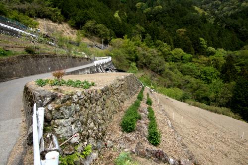 水道が敷かれるまでは、水源から竹筒で水を引いていたという
