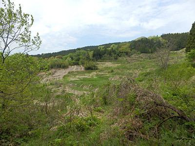 耕作放棄地の棚田はちょっとした廃墟の雰囲気。