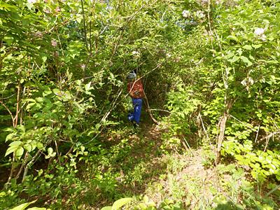 完全に木々に囲まれた。自分たちが小さくなっていないかと、ちょっと本気で不安になった。