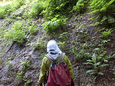 どうがんばっても手が届かない崖に生えている山菜が採りたいケンちゃん。
