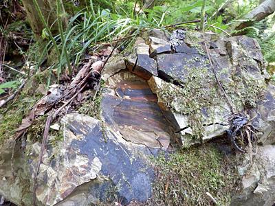 この辺の岩はモロそうなので、絶対私は無理。