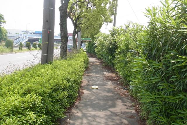 ジャングルのような歩道を抜けて
