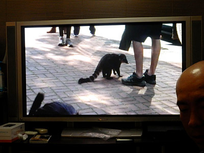 上映していたS子さんのビデオに謎の動物が映って、今日一番のどよめきが起きた。