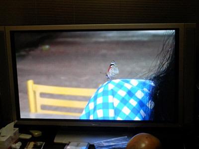 このあたりは蝶の宝庫で、I子さんの肩に止まる場面も。でも虫が大嫌いなので、すごく嫌だったそうだ。
