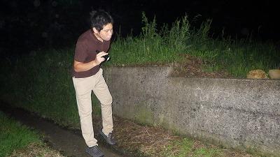 夜間に路上や側溝を見て回る。