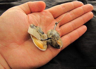 餌は殻を少し割ったアサリ。釣具屋さんでは小さめのイカもおすすめされた。