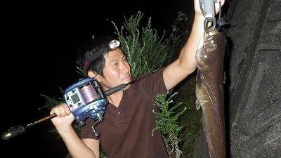 夜なら簡単に釣れる。お店で売ってない系魚類の中では割と入手しやすい方。
