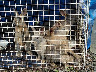 こちらは訓練中らしきウサギさん。確かに訓練前っていう顔つきですな。