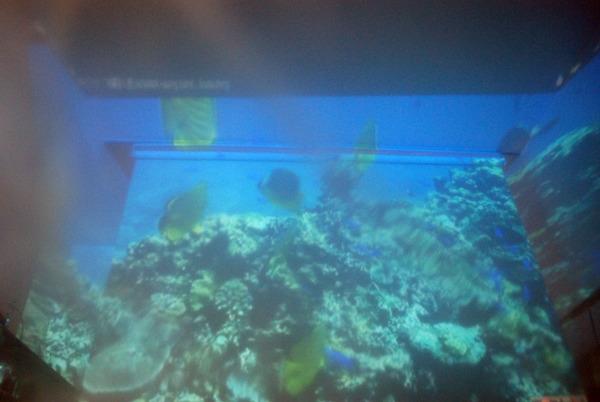 ゴミ袋の向こうにはカラフルな魚たち。サメに襲われる心配もない