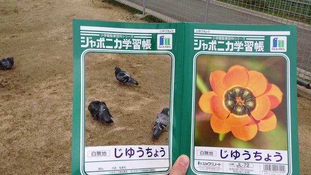街で普通にみかける動物も、このノートをかざすとなんだか新鮮に。
