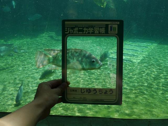 なかなかフレームにおさまらない魚。