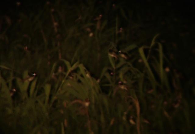 写真が下手ですいません…ツバメが眠るたびに光が消えて行くのがなんともまた。