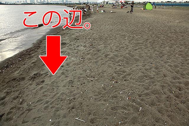 波打ち際は明らかに砂質が違うのだ。