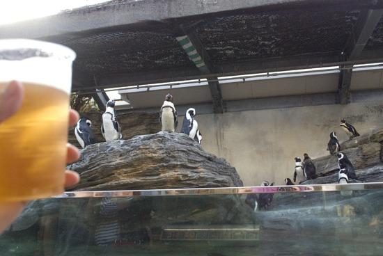 ペンギンを眺めながらの一杯もなかなか良いものだ