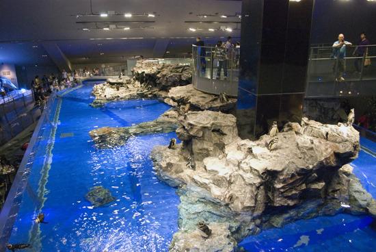 一番の目玉は巨大なペンギンの水槽