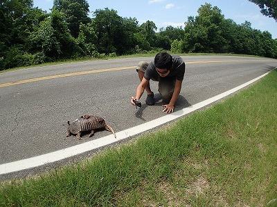 アルマジロのD.O.R(Dead On the Road)を発見。元気に道路を横断しようとしているものも何頭か見かけた。