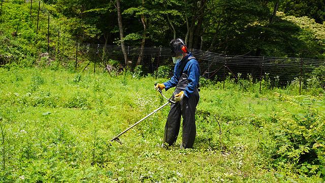 マシンで草を刈ると楽しい!
