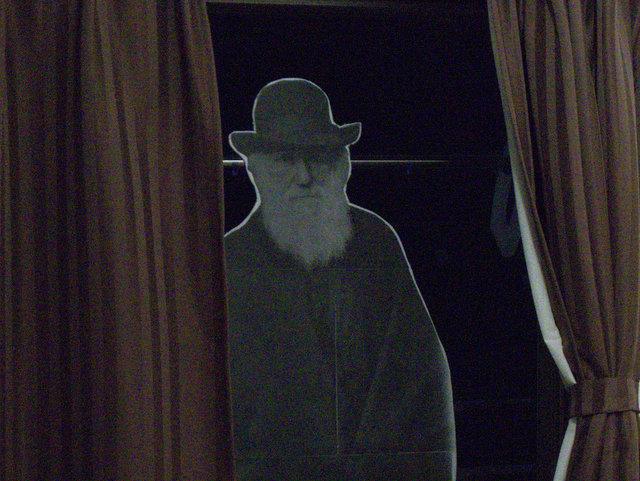 ひょっとして・・・ダーウィン?