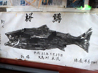 サクラマス(降海型の大きくなったヤマメ)も釣れるのか!となると、そっちの線も考えられるな。