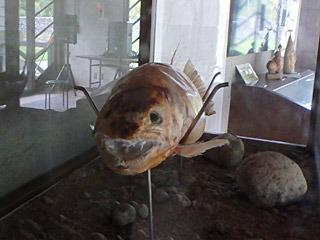 これは実際に大鳥池で捉えられた魚の剥製。大物のイワナだろうか。
