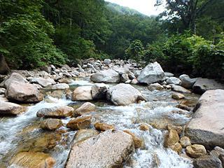 それにしてもきれいな川です。この上流に池があるというのがイメージできないけど。