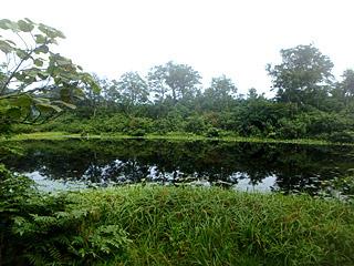 昔は沢が流れ込み、大鳥池ともつながっていたそうだが、今は独立した池なっているようだ。タキタロウよりもライギョとかが似合うかな。