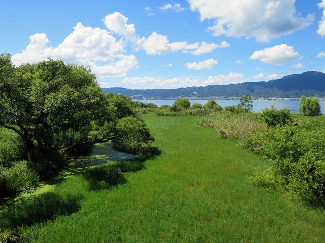 河口はいい感じの湿地帯になっていた