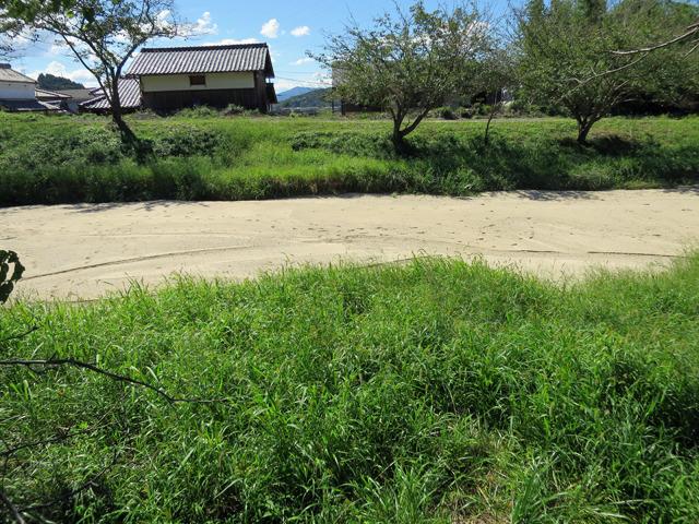 道路との段差もあまりなく、川の中は白い砂だけになった