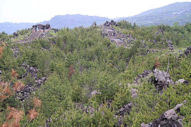 桜島の溶岩原を歩けるようになっている。