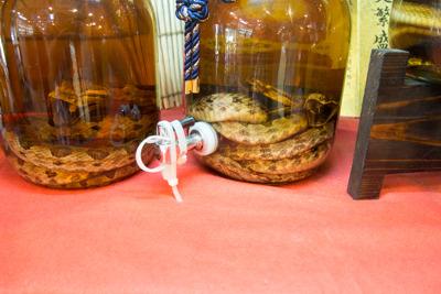 最近蛇口付きハブ酒が新商品としてでたそうです。
