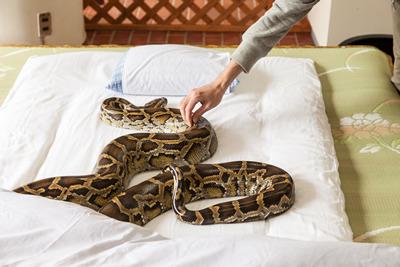 大蛇と布団で添い寝できるという斬新な企画