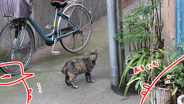 のら猫を何匹も見かけることができる。風呂に関係ないけど