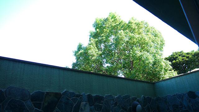 公園の緑が見える