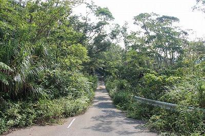 林道を車で走りながら探す。