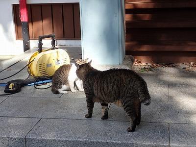 他のネコとの喧嘩の方が大事みたい。