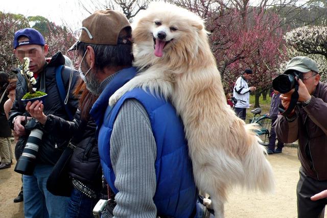 犬の得意げな表情と、後ろでカメラを構えるおじさんにも注目してください。